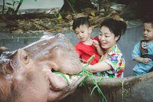 Зоопарк «Дусит» переезжает из Бангкока