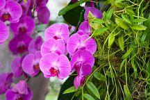 В Чиангмае пройдет фестиваль цветов Colourful Garden