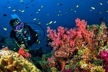 ТАТ предлагает скидки на дайвинг за очистку океана