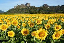 Праздник солнечных цветов в провинции Лопбури