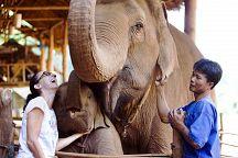 Специальное предложение от отеля Anantara Golden Triangle Elephant Camp & Resort