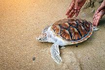 На Пхукете в честь Сонгкрана выпустили на волю черепах