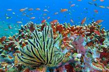 В Таиланде появится первый искусственный риф
