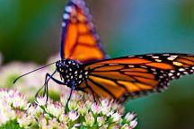 Фестиваль бабочек начался на востоке Таиланда