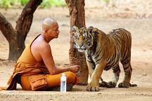 Монахи Тигриного монастыря не хотят отдавать животных в заповедник