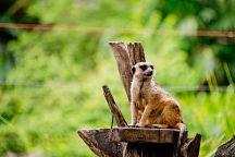 Бангкокский зоопарк Dusit Zoo закрывается