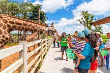 Зоопарк Dusit пробудет в Бангкоке до 1 октября
