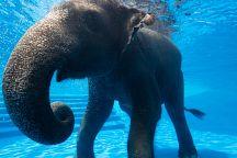 Купание слоненка в зоопарке Кхао Кео