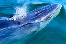 Сезон наблюдения за китами начался в Пхетчабури