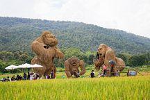 В Чиангмае появился Кинг Конг