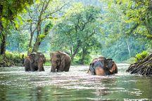 Таиланд вошел в ТОП-5 стран мира для путешествий по дикой природе