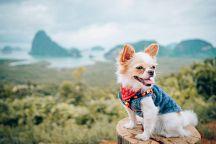 Владельцев собак приглашают на благотворительный марафон