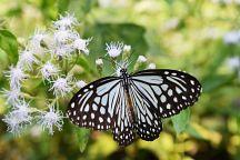Провинция Сакэу приглашает на Фестиваль бабочек
