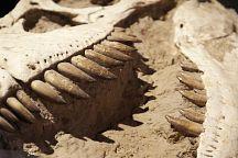 Тайские археологи открыли новый вид динозавра
