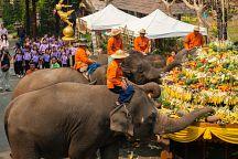 Таиланд отмечает День тайского слона