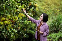 Таиланд намерен увеличить экспорт фруктов