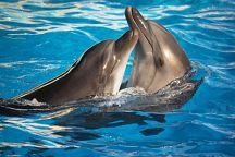 В начале ноября на Пхукете открылся дельфинарий