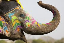 В Таиланде пройдет Фестиваль самых больших слонов