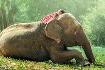 Таиланд проводит конкурс экологических проектов
