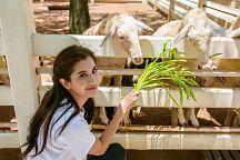 Выездные мероприятия в Greta Farm