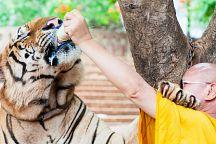 В Канчанабури откроют зоопарк с тиграми