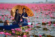 В Таиланде зацвело озеро лотосов