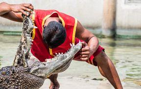 Шоу крокодилов и Парк миллионолетних камней